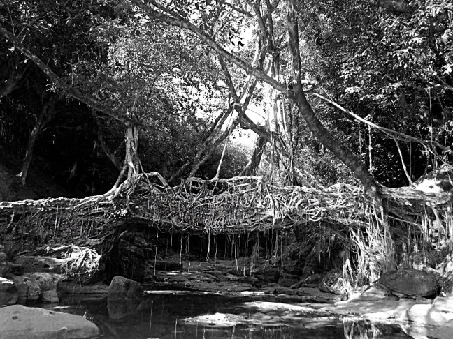 Meghalaya__living_root_bridge